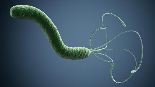 ヘリコバクター・ピロリ菌について